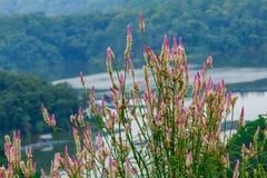 Blume und die Ansicht des Reservoirs Stockfotografie