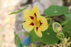 Blume und die Wanze Stockbild