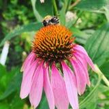 Blume und eine Biene Stockfotos