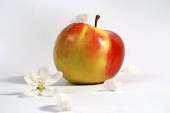 Blume und Frucht Stockfotos