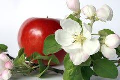 Blume und Frucht Lizenzfreies Stockbild