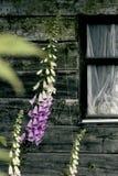 Blume und halbes Fenster lizenzfreies stockbild