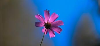 Blume und Himmel lizenzfreie stockfotos