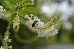 Blume und Insekt Stockfotos