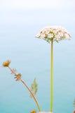 Blume und Meer Lizenzfreie Stockfotografie