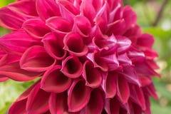Blume und schöne Blumenblätter Stockfoto