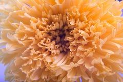 Blume und schöne Blumenblätter nave Stockbild