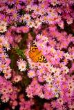 Blume und Schmetterling Lizenzfreies Stockbild