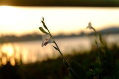 Blume und Sonnenuntergang Stockfoto