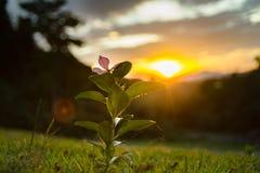 Blume und Sonnenuntergang Stockbild