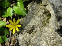 Blume und Stein Stockfoto