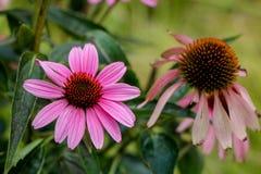 Blume und tote Blume lizenzfreie stockfotos