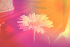Blume in unscharfem Hintergrund mit Weinleseeffekt stock abbildung