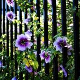 Blume unter ficht ihm stockfotografie