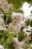 Blume unter snow1 lizenzfreie stockfotografie