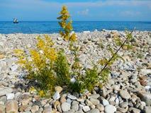 Blume unter Steinen stockfotografie