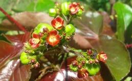 Blume varenda lizenzfreie stockfotografie