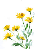 Blume, Vektorillustration Stockfoto