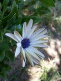 Blume vom Garten Lizenzfreie Stockfotos