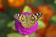 Blume vom Garten mit einem Schmetterling Stockfotografie