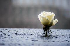 Blume von gefallen stockfotografie