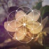 Blume von lebens- das Ineinander greifen kreist altes Symbol ein Heilige Geometrie Mathematik, Natur und Geistigkeit herein Lizenzfreies Stockbild