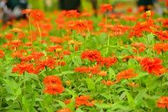 Blume von Thailand Stockbild