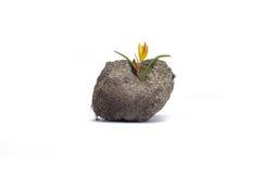 Blume wächst in einem Stück Land Stockfotos