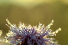 Blume wäscht Tau Stockfotografie