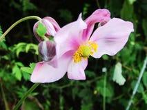 Blume, wilde Blumen, Lizenzfreie Stockbilder