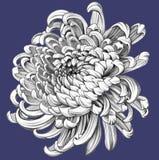Blume Zeichnung des Baums auf einem weißen Hintergrund Lizenzfreie Stockfotografie
