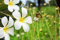 Blume zerbrechlich lizenzfreies stockfoto