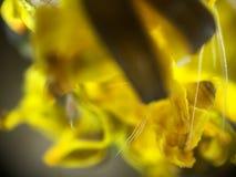 Blume - Zoom 400x zu den Anlagen Lizenzfreies Stockfoto