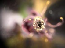 Blume - Zoom 400x zu den Anlagen Lizenzfreie Stockbilder