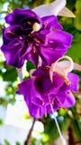 Blume zwei Stockbild
