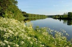 Blumen über dem Fluss Lizenzfreies Stockbild