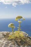 Blumen über dem Meer Stockfotos