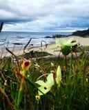 Blumen über dem sealine lizenzfreie stockfotos