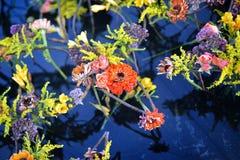 Blumen über dem Wasser Stockfotografie