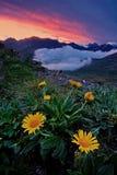 Blumen über den Wolken Einer der Vulkane von Kamchatka Vulkane von Kamchatka faszinieren stockfotografie