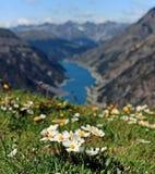 Blumen über den Wolken Einer der Vulkane von Kamchatka Vulkane von Kamchatka faszinieren lizenzfreie stockfotos