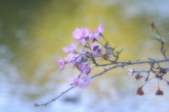 Blumen über See Stockfoto