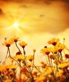 Blumen über warmem Sonnenuntergang Lizenzfreies Stockfoto