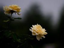 Blumen 02 Lizenzfreies Stockfoto