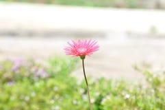 Blumen Stockfoto