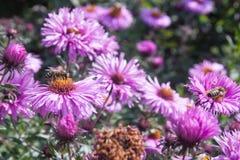 Blumen Photo stock