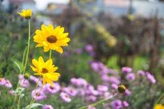 Blumen Photographie stock