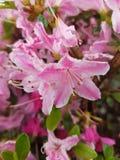 Blumen Στοκ Φωτογραφία