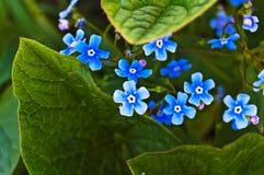 Blumen. Lizenzfreie Stockfotos