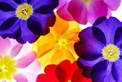 Blumen lizenzfreies stockbild